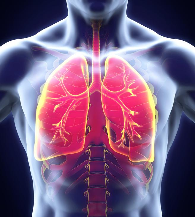 Bild zum Asthma Studienfinder Novartis - Klinische Forschung Novartis