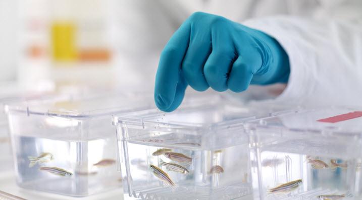 novartis-klinische-forschung-ethik-tierversuche-maus-ethische-standars-für-klinische-studien