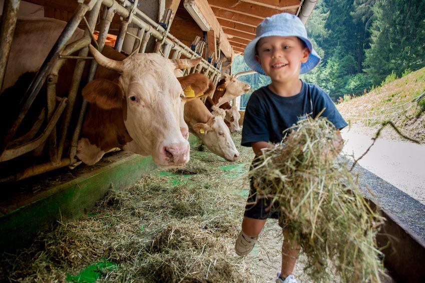Hygienehypothese: Kind auf dem Bauernhof